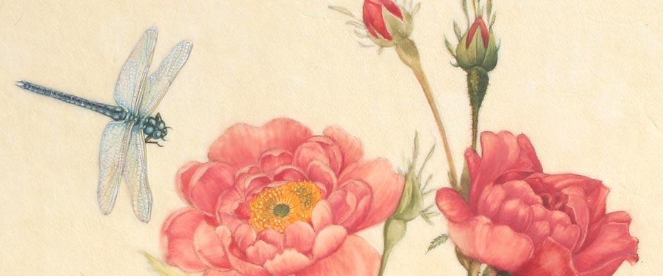 diapo-libellule-et-roses