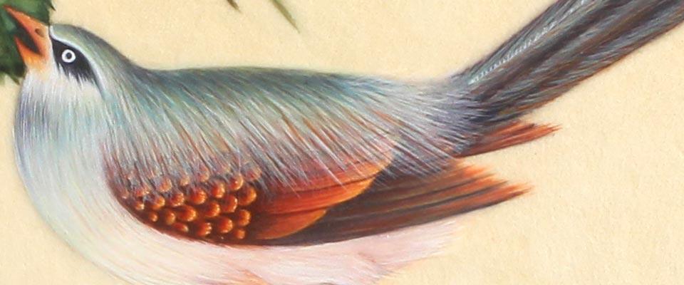 diapo-oiseau
