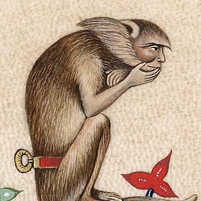 babouin-apprivoise-carre